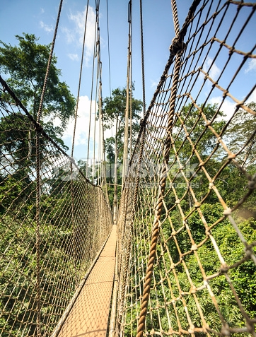 Canopy walkway in Kakum National Park, Accra Region, Ghana, West Africa